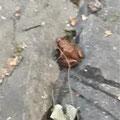 Wir haben eine Kröte gefunden!