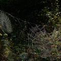 Typisch Herbst: Alte Wiben im Morgentau