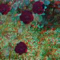 Rose in einem Vorgarten von Frauenweiler