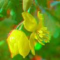 Blüte des Schöllkrauts