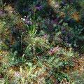 Genügsame Pflanzen - Foto Peter Welker