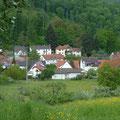 """Exkursionsziel im Mai: Waldhilsbach - reich an Natur und ideal für eine """"Stunde der Gartenvögel""""!"""