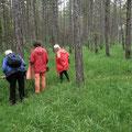 Ein erstaunlicher Kiefernwald  - Foto Ingo P.