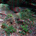 So enden Bäume im Bannwald