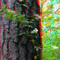 Der Wald duftete nach Liguster