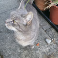 Katze Lilli