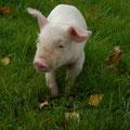 Bonjour, je vous emmène visiter notre ferme.