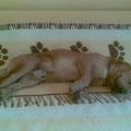 Simba zu Hause in Deutschland
