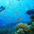 Es erwartet Sie eine tolle Unterwasserwelt