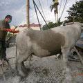 セメントで水牛を作ります