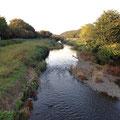 野川、谷戸橋、上流を望む