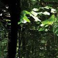 Piaimá. Spirit if the forests, Pemon Culture, Venezuela. 2007