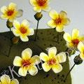 kleine gelb orange Blüten