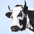 Lilas III - Acrylique sur toile - 60 x 60 cm - 2019<br><br>Peinture vache . vache vosgienne . toile . peinture animalière . peintre animalier . race vosgienne