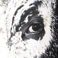L'Oeil de la Vosgienne - Acrylique sur toile - 38 x 46 cm - 2006<br><br>Peinture vache . dessin vache . vache vosgienne . toile . peinture animalière . peintre animalier . race vosgienne