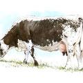 Vosgienne pâturage II - Encre couleur réhaussée de crayon noir sur papier - 24 x 18 cm - 2013<br><br>Peinture vache . dessin vache . vache vosgienne . toile . peinture animalière . peintre animalier . race vosgienne