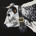 Rosée - Acrylique sur toile - 60 x 60 cm - 2016<br><br>Peinture vache . vache vosgienne . toile . peinture animalière . peintre animalier . race vosgienne