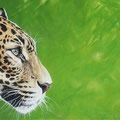 Ceci n'est pas une voiture - (Jaguar) - Acrylique sur toile - 90 x 30 cm - 2016<br><br>Peinture . peintre animalier . artiste peintre . peinture animalière . animal . félin