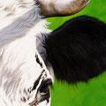 Demi-face - Acrylique sur toile sur panneau - 20 X 60 cm - 2006<br><br>Peinture vache . dessin vache . vache vosgienne . toile . peinture animalière . peintre animalier . race vosgienne