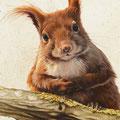 Ecureuil (détail) - Acrylique sur toile - 0,40 x 1,20 m - 2012<br><br>Peinture . peintre animalier . artiste peintre . peinture animalière . animal