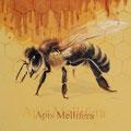Apis Mellifera - Encre couleur et crayon pastel sur papier - 57 x 57 cm - 2017 <br><br>Peinture . peintre animalier . artiste peintre . peinture animalière . animal . abeille . ruche . miel