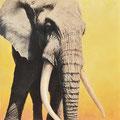 Le Patriarche - Acrylique sur toile - 1 x 1 m - 2008 <br><br>Peinture . peintre animalier . artiste peintre . peinture animalière . animal . elephant . afrique