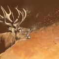 Brâme - Acrylique et crayon pastel sur papier brun - 70 x 50 cm - 2015<br><br>Peinture . peintre animalier . artiste peintre . peinture animalière . animal . dessin . brâme cerf