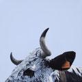 Odyssée - Acrylique sur toile - 50 x 50 cm - 2018<br><br>Peinture vache . vache vosgienne . toile . peinture animalière . peintre animalier . race vosgienne