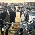 Boeufs au grand joug - Acrylique sur toile - 1994<br><br>Peinture . peintre animalier . artiste peintre . peinture animalière . animal . boeufs vosgiens . attelage