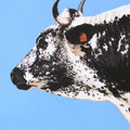 Brimbelle - Acrylique sur toile - 60 x 80 cm - 2006<br><br>Peinture vache . dessin vache . vache vosgienne . toile . peinture animalière . peintre animalier . race vosgienne