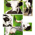 Signes extérieurs de Vosgienne I - 60 x 80 cm - 2002<br><br>Peinture vache . dessin vache . vache vosgienne . toile . peinture animalière . peintre animalier . race vosgienne