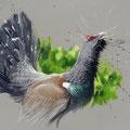 Parade - (Grand Tétras) - Techniques mixtes sur papier pastel - 70 x 50 cm - 2016<br><br>Peinture . peintre animalier . artiste peintre . peinture animalière . animal . hautes vosges