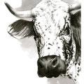 Sans titre - Encre et crayon noir sur papier - 30 x 40 cm - 2013<br><br>Peinture vache . dessin vache . vache vosgienne . toile . peinture animalière . peintre animalier . race vosgienne