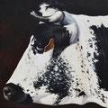 Malice - Acrylique sur toile - 40 x 40 cm - 2011<br><br>Peinture vache . dessin vache . vache vosgienne . toile . peinture animalière . peintre animalier . race vosgienne