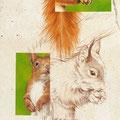 Ecureuil - Acrylique sur toile - 0,40 x 1,20 m - 2012<br><br>Peinture . peintre animalier . artiste peintre . peinture animalière . animal
