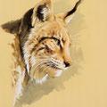 Lynx (profil) - Encre couleur et crayon pastel sur papier - 47 x 67 cm - 2017 <br><br>Peinture . peintre animalier . artiste peintre . peinture animalière . animal . félin