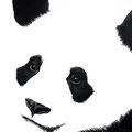 Panda II - Acrylique sur panneau médium - 50 x 50 cm - 2016<br><br>Peinture . peintre animalier . artiste peintre . peinture animalière . animal . noir et blanc