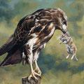 Buse variable et campagnole - Acrylique sur toile - 38 x 55 cm - 1994<br><br>Peinture . peintre animalier . artiste peintre . peinture animalière . animal . rapace