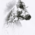 Contre-plongée - Crayon noir sur papier - 40 x 50 cm - 2014