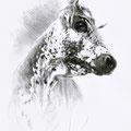 Contre-plongée - Crayon noir sur papier - 40 x 50 cm - 2014<br><br>Peinture vache . dessin vache . vache vosgienne . toile . peinture animalière . peintre animalier . race vosgienne