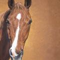 Skunzeito Hongre pur-sang Anglais (détail) - Acrylique sur toile - 2,20 x 2 m - 2006  <br><br>Peinture . peintre animalier . artiste peintre . peinture animalière . animal . cheval . portrait