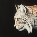 Lynx boréal - Acrylique sur toile - 40 x 40 cm - 2010<br><br>Peinture . peintre animalier . artiste peintre . peinture animalière . animal . peinture lynx