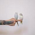 Tatouage plume colorée main