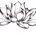 Dessin tatouage fleur de lotus
