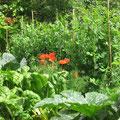 Der Gemüsegarten