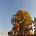 Tree in Shinjuku Gyoen