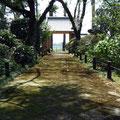 Mossy path at Senpuku-ji