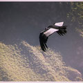 Condors kijken bij Cruz del Condor