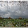 Lotusfarm met huisjes voor arbeiders