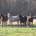 Ihre Herde (ganz rechts May)